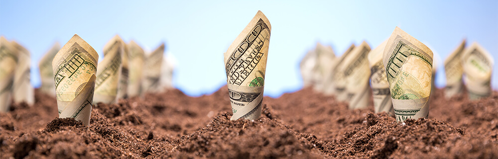 Money growing in dirt